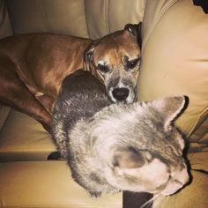 mercuriusfm:  #HappyThanksgiving. If these 2 can work it out surely we can too. - #thanksgiving #cat #dog #cats #dogs #pets #pet #peace #love #unity #respect #plur #humanity #animal #animals http://ift.tt/2fcUuuf  #anime #cosplay #costume #otaku #gamer #videogames