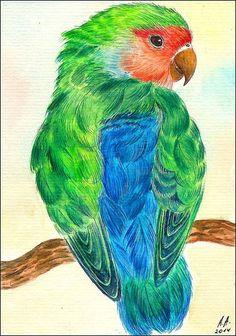Original Aquarell Bild Vogel Papagei Agaporniden