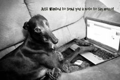 Greyhound Dog Photo Art Card 5X7 Just a note to by GreytLifeCards, $4.25