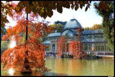 Palacio de Cristal en Otoño. Parque del Retiro. Madrid (España) || Foto de danimero (Panoramio)