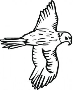 bird to color bird coloring pages free falcon