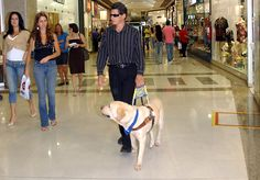 A blind man is assisted by a guide dog in Brasília, Brazil Caoguia2006 - Blindness - Wikipedia, the free encyclopedia