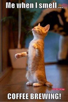 Cats 🐱 - Cat, cat memes, cats funny, cats and kittens and cats cute. Cute Kittens, Cats And Kittens, Kitty Cats, Funny Cats, Funny Animals, Cute Animals, Funny Humor, Funniest Animals, Grumpy Cats