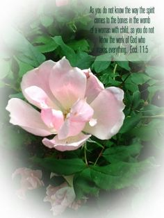Original copyrighted floral photography with scripture verses