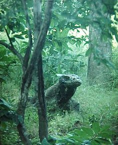 Komodo Dragon Island in Indonesia. This would be a pretty epic adventure don't you say?