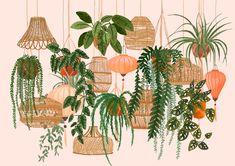 Hanoi Lampshades / Hanging Plants / Botanical Illustration / Lanterns / Bamboo / Wicker / Wall Art