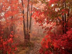 fall animal pictures   New England Fall Desktop