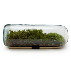 Moss Terrarium Bottle | $38 from Uncommon Goods