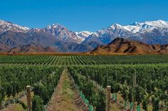 Mendoza is framed by an emblematic wine tour. The Andes Mountains in Mendoza has its maximum expression, ideal for rural tourism, adventure, or skiing. Parque Natural, Wine Tourism, Argentina Travel, Argentina Food, Ushuaia, Beautiful Places To Visit, Best Vacations, Wine Country, South America