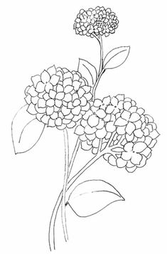 Adult Coloring Book Pages, Coloring Pages For Girls, Coloring Books, Hydrangea Colors, Hydrangea Flower, Hydrangeas, Flower Coloring Sheets, Wilted Flowers, Fabric Painting