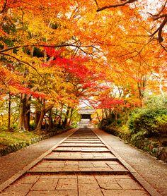 Red Path to Bishamon temple and gardens #Kyoto #Japan
