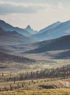 Summer in Tombstone Territorial Park, Yukon