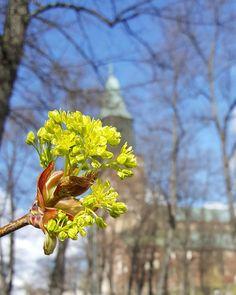 Springmood in Turku  #kevät #spring #newbeginnings #uudetalut #seasonsoffinland #turku #åbo #visitturku #kissmyturku #turkucathedral #turuntuomiokirkko #lifestyleblogger #nelkytplusblogit #åblogit