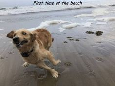 First time at the beach                                                                                                                                                                                 More