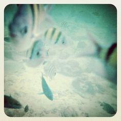 Snorkeling at Langkawi's Pulau Payar Snorkeling, Travel, Diving, Viajes, Destinations, Traveling, Trips, Scuba Diving