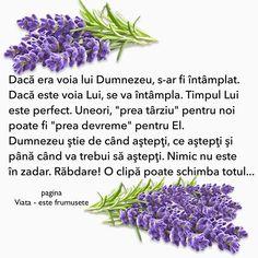 God Prayer, Christianity, Prayers, Wisdom, Faith, Thoughts, Quotes, Plants, Amin
