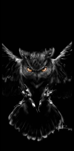 Free Owl Wallpaper Iphone On High Definition Wallpaper Owl Wallpaper Iphone, Cats Wallpaper, Animal Wallpaper, Cute Owls Wallpaper, Owl Photos, Owl Pictures, Owl Tattoo Drawings, Animal Drawings, Beautiful Owl