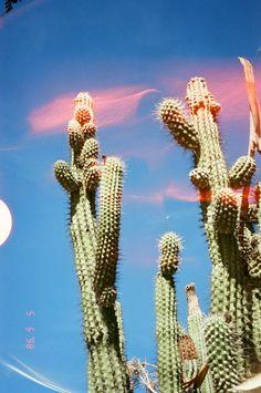 cactus cactus cactus - big love for the american west Desert Dream, Desert Life, Desert Sun, Echeveria, Desert Aesthetic, Cactus Planta, Cactus Cactus, Desert Flowers, Plants Are Friends