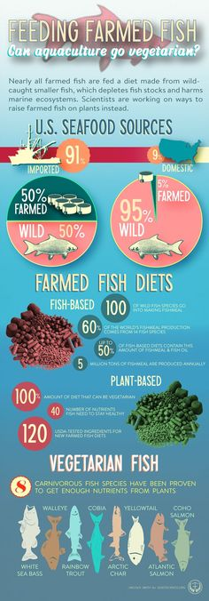 The Key to Sustainable Fish Farming? Vegetarian Fish