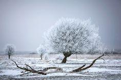 Het Lauwersmeer had veel weg van een toendra afgelopen weekend. Prachtige zwart-wit contrasten met veel rijp aan de bomen. Door communitylid Jurjen01 - NG FotoCommunity ©