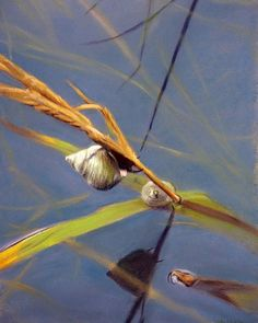 Marsh Snail by Christopher Reid Wildlife Art, Various Artists, Artist At Work, Painting & Drawing, Kayaking, Fine Art America, Art Pieces, Pastel, Wall Art