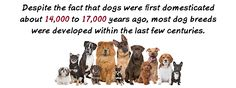 Dog History - Dog Pet Magazines in Westchester County NY, Fairfield County CT, New York City, and Long Island, USA by THE PET GAZETTE. Choosing the perfect dog name