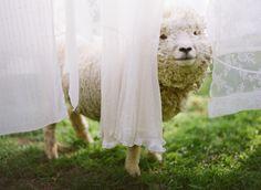 bright star 10 Bright Star : Erica Elizabeth Designs #sweet #sheep