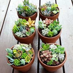 Available from the Succulent Guy at the Byron Bay Beachside Market - Easter Saturday 26th March by thesucculentguy