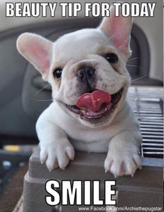 """A collection of French and American Bulldog puppies for Animals and Pets lovers. In this post, we share American Bulldog Puppies Will Make Your Day"""". Animals And Pets, Baby Animals, Funny Animals, Cute Animals, Cute Puppies, Cute Dogs, Dogs And Puppies, Doggies, Terrier Puppies"""