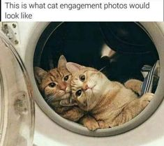 Animals are the best entertainment in the World, which make us laugh anytime, anywhere! Just look ridiculous animal picdump of the day 77 if you love funny animals. So ridiculous, funny and cute 20 funny animal pics! Funny Animal Memes, Funny Animal Pictures, Cat Memes, Funny Animals, Cute Animals, Funny Memes, Funny Cat Photos, Meme Meme, Hilarious Pictures