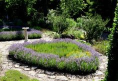 Knot Garden FROM DRY STONE GARDENS Plants and Stone for California Gardens UC Botanical Garden MEDITERANEAN SECTION