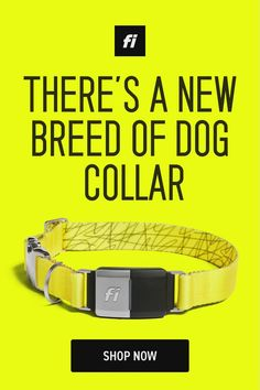 Fi Smart Dog Collar: the collar that never stops tracking your dog. GPS tracking, activity monitoring, and unmatched battery life. Try Fi today. I Love Dogs, Cute Dogs, Dog Breeds Little, Dog Items, Gps Tracking, Baby Dogs, Dog Accessories, Dog Care, Dog Grooming