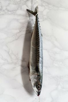 Mackerel photography Ilva Beretta