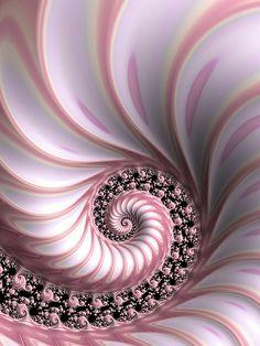 Pink Lady Digital Art by Amanda Moore Art Fractal, Fractal Images, Fractal Design, Art Pictures, Art Images, Spiral Art, Fibonacci Spiral, Shell Art, Natural Forms