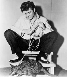 Yep. Ladies and gentlemen, the King of Rock, Elvis Presley, used to own a kangaroo! Rest in peace, King!