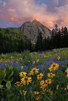Sunrise in wildflowers, Sneffels Wilderness, Colorado