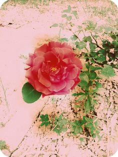 flower ^ ^