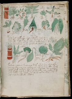the Voynich Manuscript @Jade Leth click through and read about this!