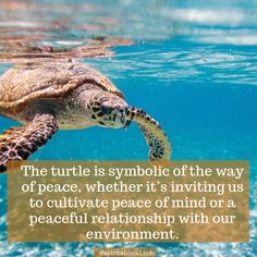 Turtle Spirit Animal The turtle totem wisdom teaches us about walking our path in peace and sticking to it with determination and serenity. Turtle Spirit Animal, Animal Spirit Guides, Your Spirit Animal, Turtle Symbolism, Animal Symbolism, Turtle Quotes, Types Of Turtles, Sea Turtle Pictures, Animal Meanings