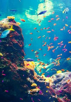 الحيد المرجاني Coral Reef Récif de Corail