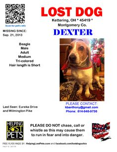 Lost Dog - Beagle - Kettering, OH, United States
