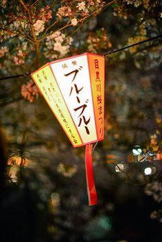 Sakura, hanami, pink, lantern, japan