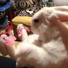 Somebody got new slippers for Christmas!