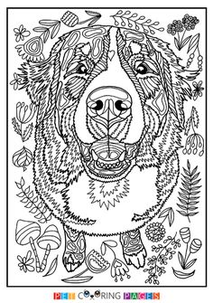 d8b64be ae b bernese mountain dogs coloring pages