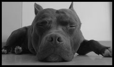 ;This is what my pitt is great at