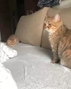 Play with me mom - your daily dose of funny cats - cute kittens - pet memes - pets in clothes - kitty breeds - sweet animal pictures - perfect photos for cat moms Cute Funny Animals, Cute Baby Animals, Funny Cats, Animals Sea, Cats Humor, Funny Horses, Cute Kittens, Ragdoll Kittens, Kitten Meowing