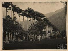 Marc Ferrez. Avenida das Palmeiras Imperiais, 1885. Rio de Janeiro, RJ / Acervo…