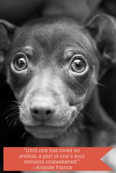 """""""Until one has loved an animal, a part of one's soul remains unawakened."""" ― Anatole France (photo: heezdedjim/Creative Commons)"""