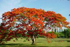 plantas brasileira - Bing Imagens