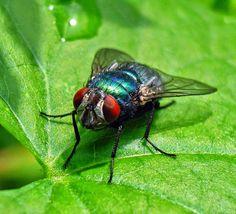 Fieggentrio: Insecten en spinnen